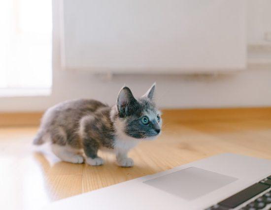 chat découvrant les sites